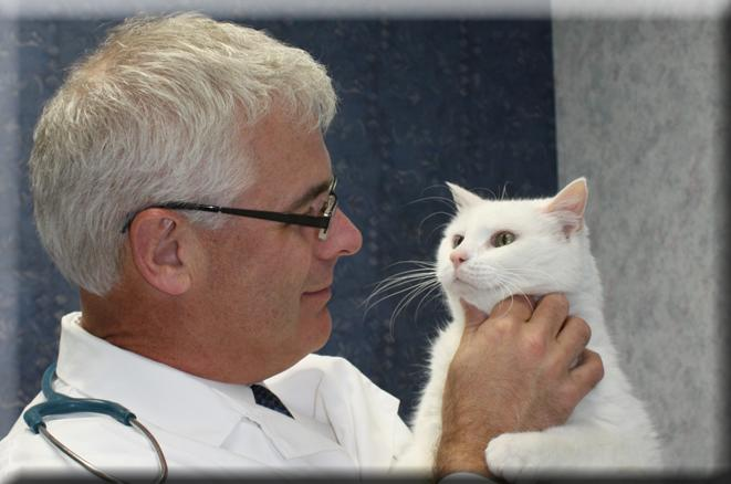 Exclusively Cats Veterinary Hospital - Waterford, MI - Dr. Steven Bailey